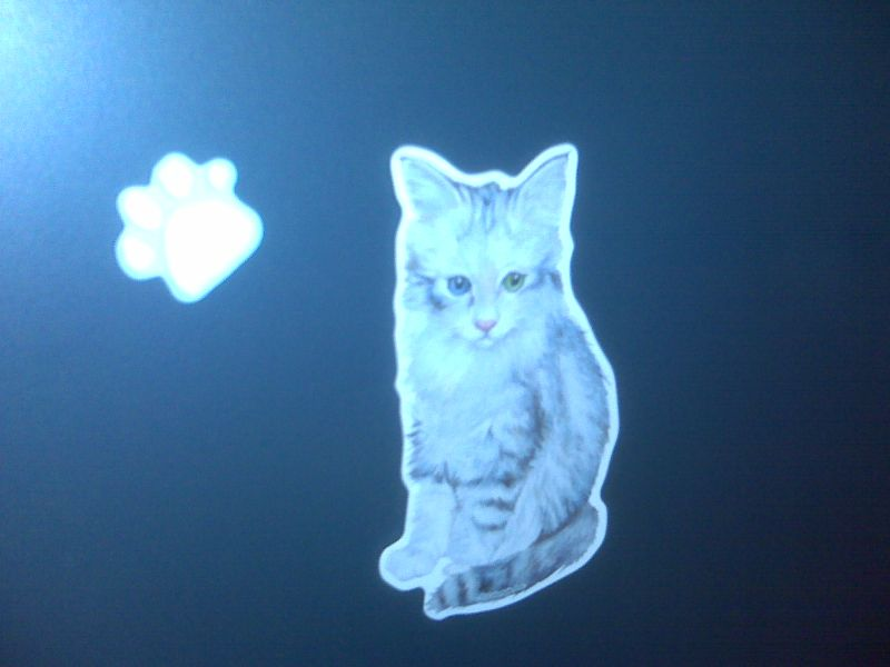 Catmagnets